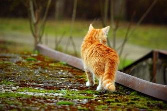 cat-1099754_640