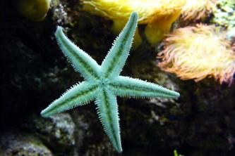 starfish-604234_640