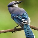 bird-386725_640