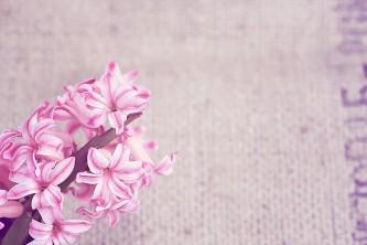 flower-1338459_640
