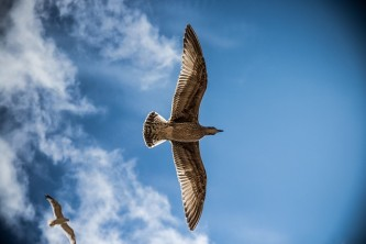 sea-gull-765490_640