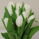 flowers-1209075_640