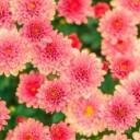 flowers-482575_640