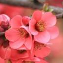spring-flowers-1225272_640