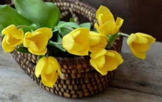 tulips-708410_640