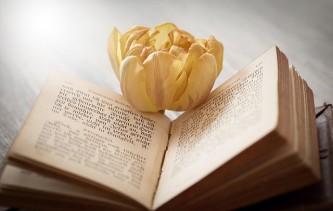 book-1325088_640