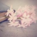 flower-1359522_640