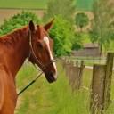 horse-1425750_640
