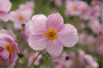 flower-215564_640