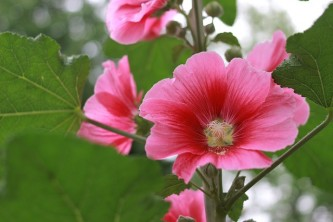 flowers-975787_640