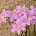 flowers-1479616_640