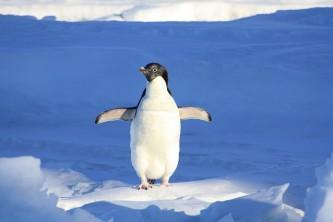 penguin-56101_640