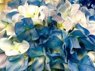 hydrangea-1623155_640
