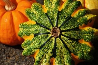 pumpkins-1677987_640