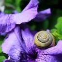 snail-1628480_640
