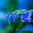 plant-1197746_640-1