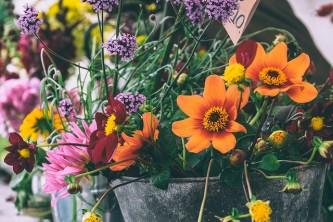 bloom-1868466_640