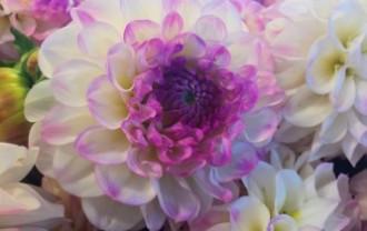 flower-918966_640