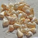 sea-shells-1235586_640-1