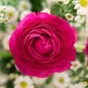 bouquet-1645390_640