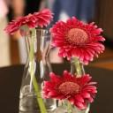 flowers-2025643_640
