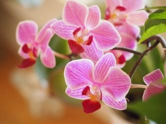 orchids-1910028_640