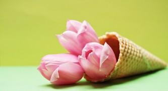 tulips-2148695_640