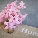 hyacinth-1403159_640