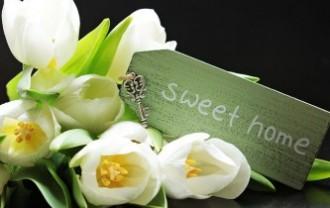 tulips-2091616_640
