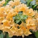 flower-1695232_640