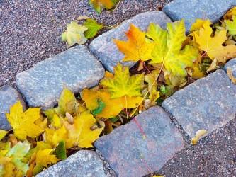 leaves-219150_640
