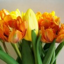 tulip-bouquet-2006029_640