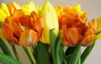 tulip-bouquet-2006029_640