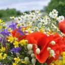 wild-flowers-849401_640