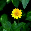 flower-2361344_640