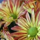 flowers-2186179_640