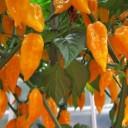 orange-950184_640