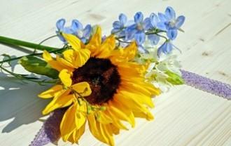sun-flower-2432548_640