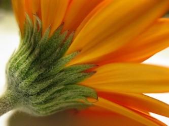 blossom-974202_640