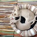 cat-202071_640