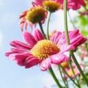 flower-367857_640