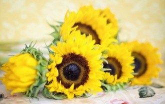sunflowers-2191627_640