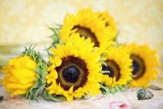 sunflowers-2191627_640