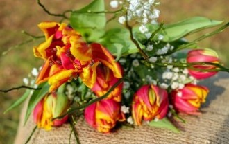 tulips-2063097_640