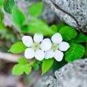 plant-2309632_640