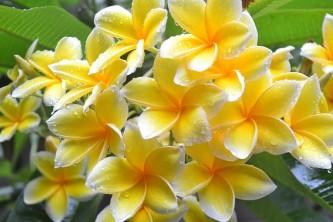 flowers-2982956_640