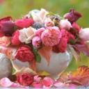 rose-2842982_640