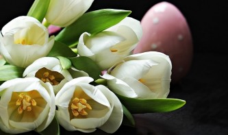 tulips-2091615_640