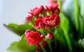 flower-1360222_640