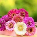 flower-3069038_640
